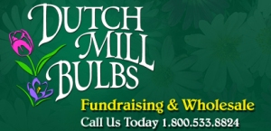 dutch_mill_bulbs